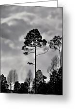 When The Air Gets Too Thin Greeting Card by Jan Amiss Photography
