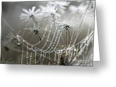 Where Jack Frost Sleeps Greeting Card by Jan Piller
