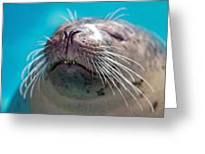 Whiskers Of A Seal Greeting Card by Karol  Livote