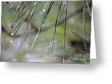 Whispers Of An Autumn Rain Greeting Card by Maria Urso
