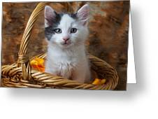 White And Gray Kitty Greeting Card by Garry Gay