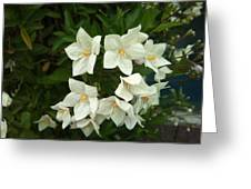 White Bloom Greeting Card by Phuong Tu