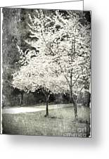 White Blooming Tree Greeting Card by Danuta Bennett