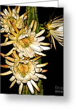White Cereus Flowers - Digital Art Greeting Card by Dolores Root