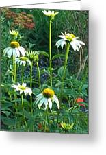 White Daisies And Garden Flowers Greeting Card by Thelma Harcum