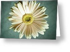 White Daisy Greeting Card by Tamyra Ayles