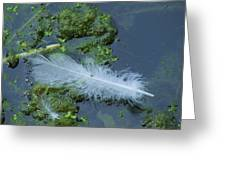 White Feather Greeting Card by Todd Sherlock