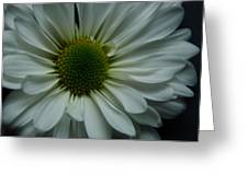 White Flower Greeting Card by Ron Smith