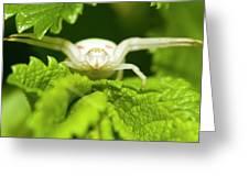 White Flower Spider Greeting Card by Jouko Mikkola