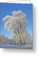 White Frost Tree Greeting Card by Ralf Kaiser