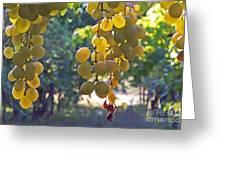 White Grapes Greeting Card by Barbara McMahon