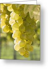 White Grapes Greeting Card by Michael Interisano