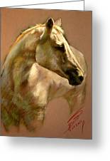 White Horse Greeting Card by Ylli Haruni