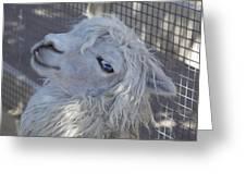White Llama Greeting Card by Enzie Shahmiri