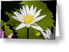 White Lotus Greeting Card by Kelley King