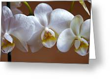 White Orchid Greeting Card by Svetlana Sewell