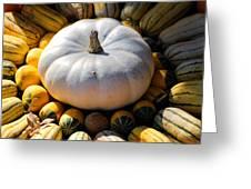 White Pumpkin Greeting Card by Jai Johnson