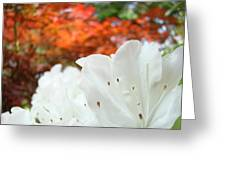 White Rhododendron Flowers Autumn Floral Prints Greeting Card by Baslee Troutman