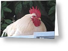 White Rooster Greeting Card by HollyWood Creation By linda zanini