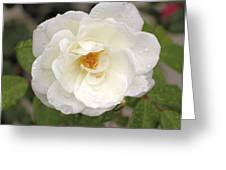 White Rose Greeting Card by Judith Szantyr