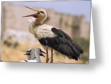 White Stork Ciconia Ciconia, Turkey Greeting Card by Carson Ganci