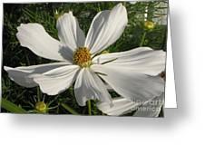 White Summer Splendor Greeting Card by Judyann Matthews