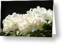 White Sunlit Floral Art Prints Rhododendron Flowers Greeting Card by Baslee Troutman