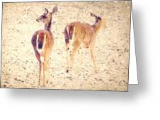 White Tails in the Snow Greeting Card by Amy Tyler