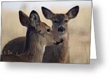 Whitetail Deer Greeting Card by Ernie Echols