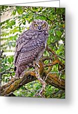 Who Gives A Hoot Greeting Card by Athena Mckinzie