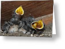 Wild Animals Baby Birds Www.pictat.ro Greeting Card by Preda Bianca Angelica