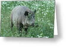 Wild Hog Between Flowers Greeting Card by Intensivelight