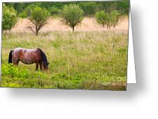 Wild Horse Grazing Greeting Card by Richard Thomas