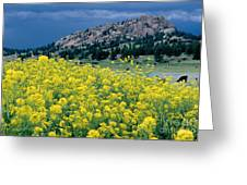 Wild Mustard Greeting Card by James Steinberg and Photo Researchers