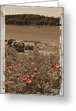 Wild Roses Greeting Card by Jim Wright
