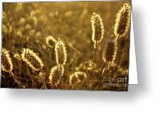 Wild Spikes Greeting Card by Carlos Caetano