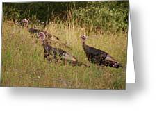 Wild Turkeys Greeting Card by Michael Peychich