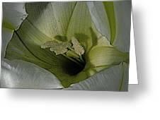 Wildflower Window Greeting Card by Chris Berry