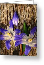 Wildflowers On Wood Greeting Card by Chris Berry