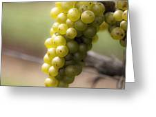 Wine Grapes Greeting Card by Leslie Leda