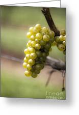 Wine Grapes Greeting Card by Leslie Leda