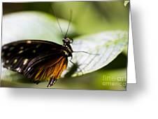 Wings Greeting Card by Leslie Leda