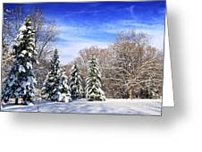 Winter Forest With Snow Greeting Card by Elena Elisseeva