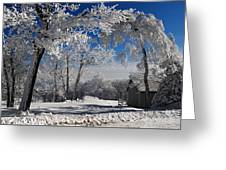 Winter Morning Greeting Card by Lois Bryan