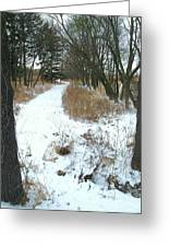 Winter Path Greeting Card by Todd Sherlock
