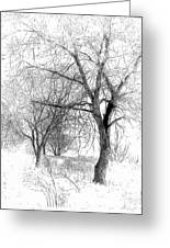 Winter Tree In Field Of Snow Sketch Greeting Card by Randy Steele