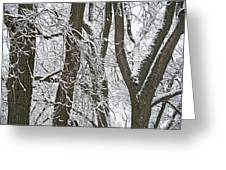 Winter Trees  Greeting Card by Aimee L Maher Photography and Art