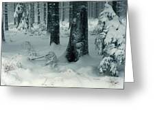 Wintry Fir Forest Greeting Card by Intensivelight
