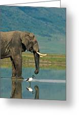 With A Sacred Ibis Threskiornis Greeting Card by Beverly Joubert