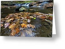 Wolf Creek Greeting Card by Rick Berk